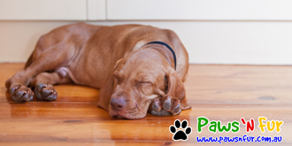 Paws 'n Fur - Professional Photographer Pets Melbourne, Dog Photography